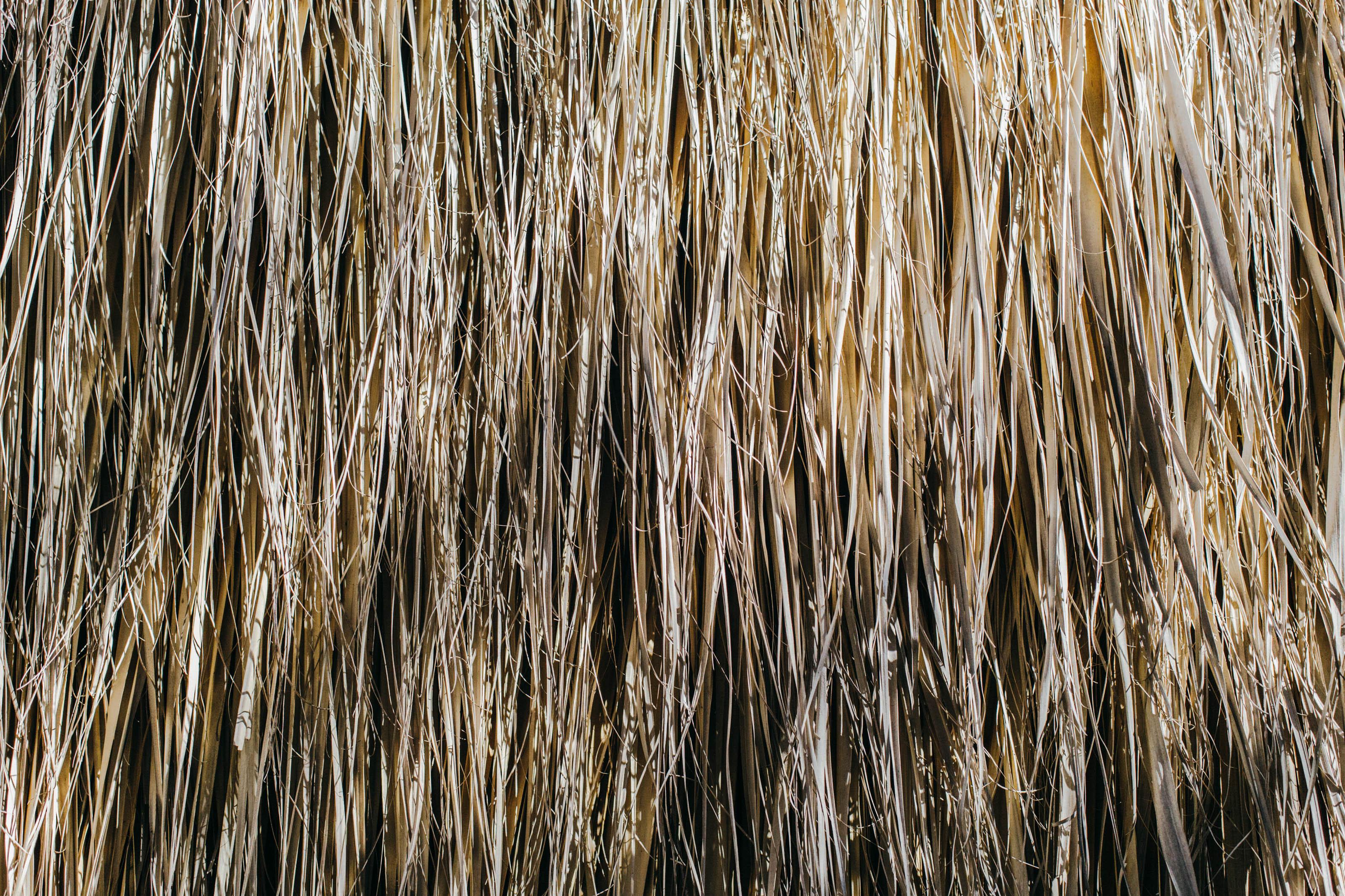 Oaxaca straw